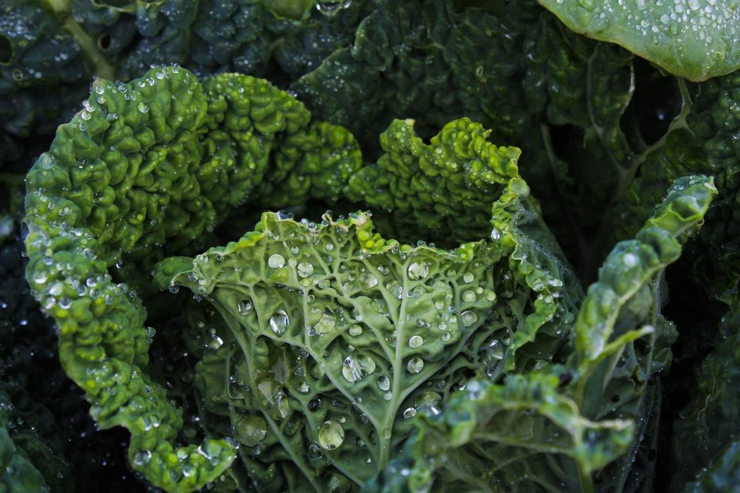 A close up of broccoli