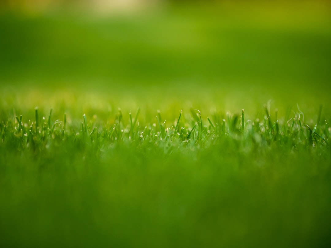 A close up of some grass